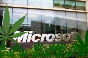 Now Microsoft Is In The Legal Weed Business, The First Among Big Tech Companies